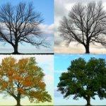 Signs and Seasons of Spiritual Life